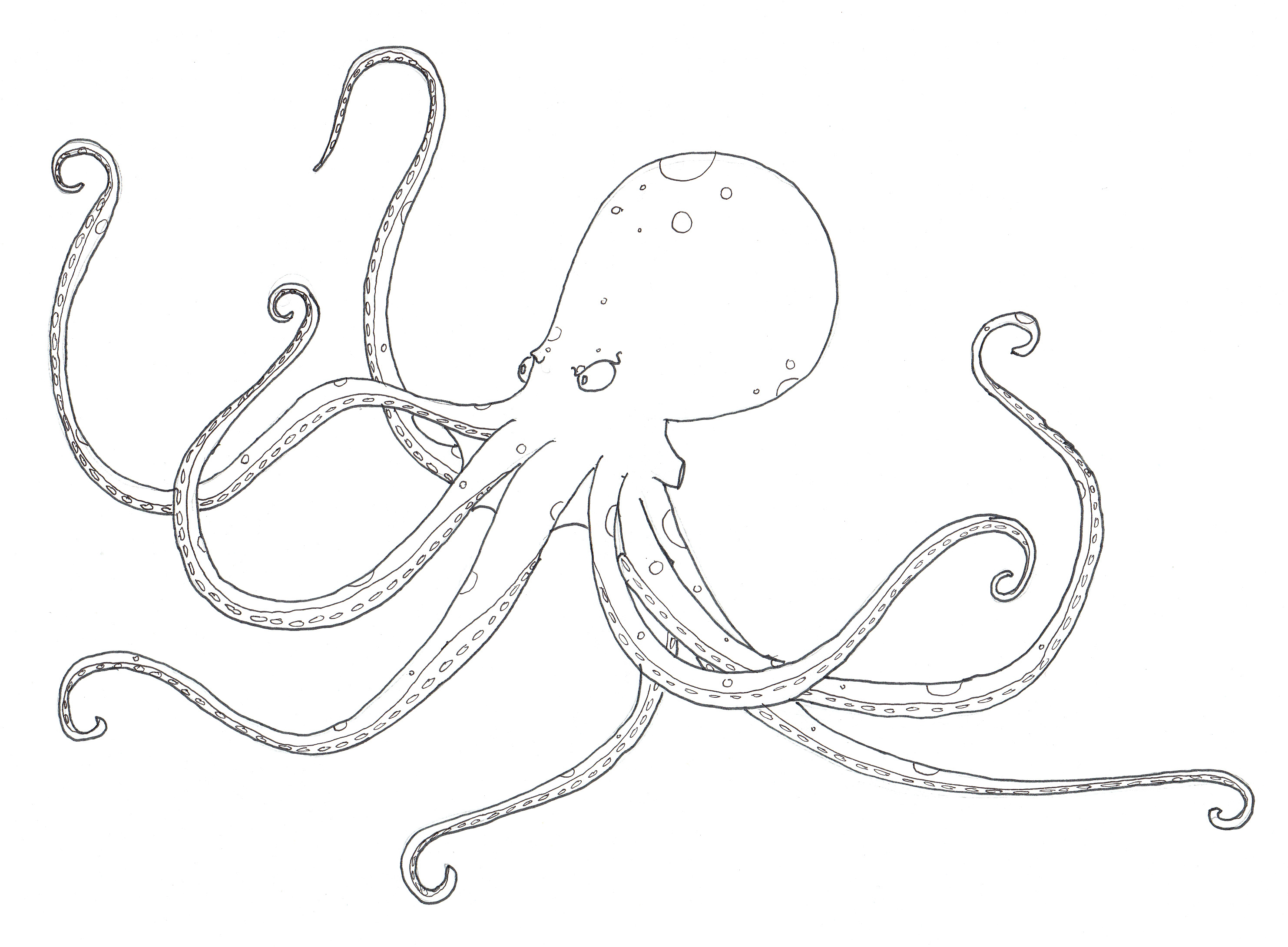 Diagram Of The Octopus - Information Of Wiring Diagram •