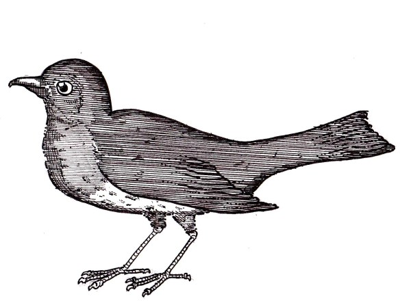 draftbird