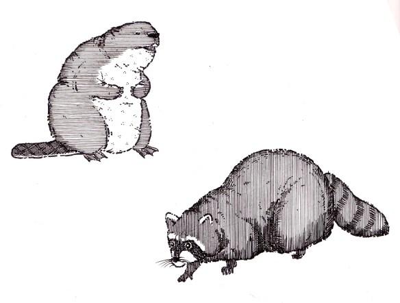 beaverraccoon