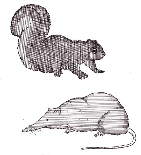 squirrilshrew