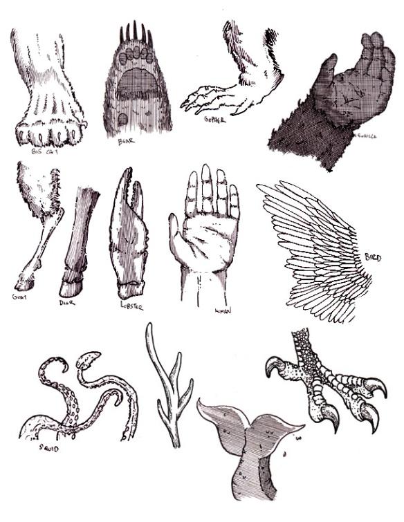 appendages