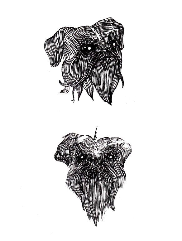 brussels griffon illustration