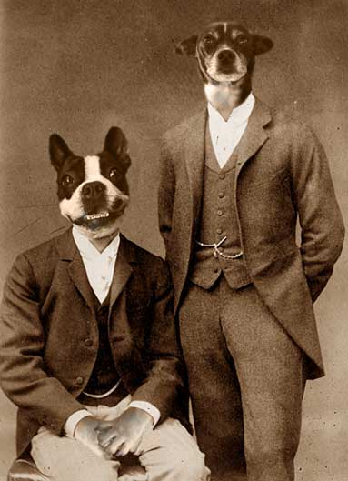 dogs in fancy clothes
